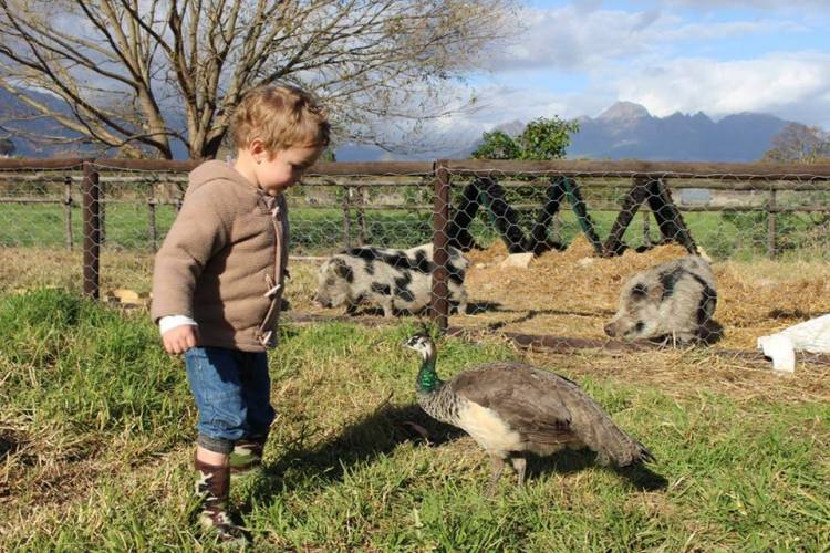 budget travel in Stellenbosch families