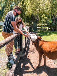 Stellenbosch animal farm