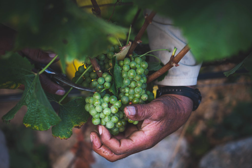 Harvest Experience – Waterford Estate