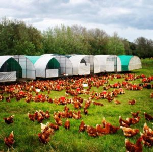 Stellenbosch farm