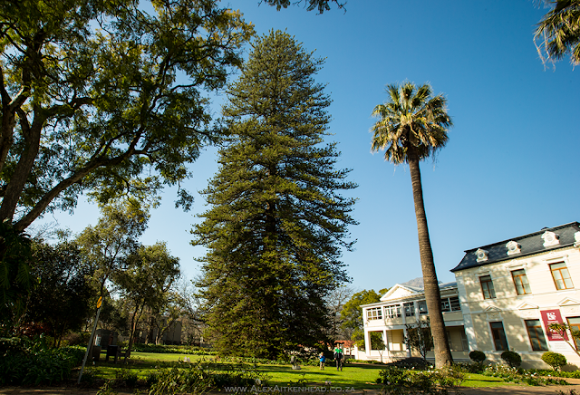 South Africa's Champion Trees